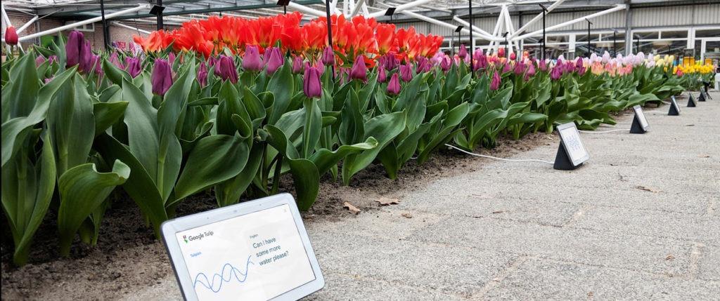 Poisson d'avril - Google Tulip